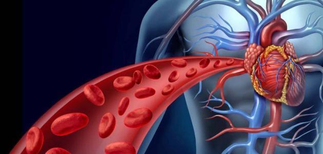 تصلب شرايين القلب التشخيص والعلاج الدكتور عمرو رشيد
